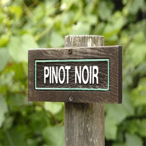 Pino Noir